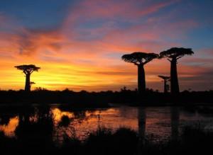 Mariage à Madagascar